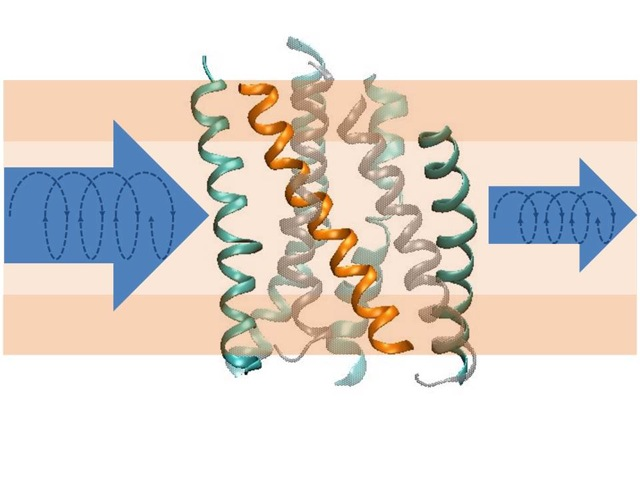 Structural Dynamics of Biomolecules